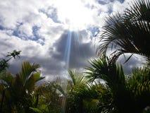 Känn den karibiska värmen Royaltyfri Fotografi