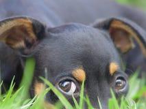 känslosam hund royaltyfri foto