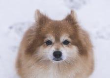 Kär familjhund Arkivfoto
