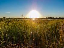 Kärn- solnedgång Royaltyfri Bild