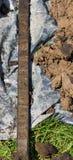 Kärna som fylls med torv royaltyfri fotografi