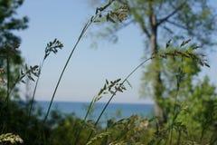 Kärna ur gräs vid sjön Fotografering för Bildbyråer