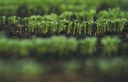 Kärna ur i växthus kärna ur växtväxthuset kärna ur i växthusbegrepp växt som kärnar ur i växthus ny livstid royaltyfria bilder