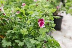 Kärna ur i växthus kärna ur växtväxthuset kärna ur i växthusbegrepp växtplanta i växthus ny livstid royaltyfri foto