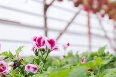 Kärna ur i växthus kärna ur växtväxthuset kärna ur i växthusbegrepp växtplanta i växthus ny livstid arkivbild