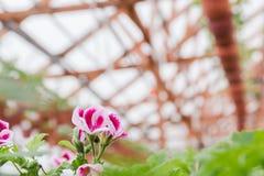 Kärna ur i växthus kärna ur växtväxthuset kärna ur i växthusbegrepp växtplanta i växthus ny livstid arkivfoton
