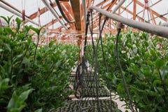 Kärna ur i växthus kärna ur växtväxthuset kärna ur i växthusbegrepp växtplanta i växthus ny livstid royaltyfria foton