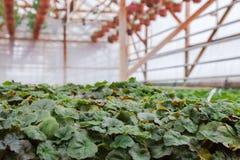 Kärna ur i växthus kärna ur växtväxthuset kärna ur i växthusbegrepp växtplanta i växthus ny livstid royaltyfria bilder