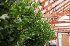Kärna ur i växthus kärna ur växtväxthuset kärna ur i växthusbegrepp växtplanta i växthus ny livstid royaltyfri fotografi