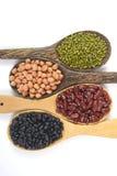 Kärnar ur beansBlackbönan, den röda bönan, jordnöten och den Mung bönan som är användbar för hälsa i träskedar på vit bakgrund Arkivfoto