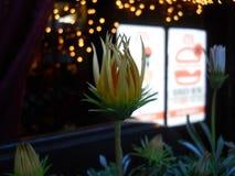 kärnar ur den blomstra blomman för bakgrund solrosen Arkivfoton