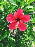 kärnar ur den blomstra blomman för bakgrund solrosen Arkivbilder