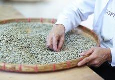 Kärnar ur valda kaffebär för arbetare brutet vid handen arkivbilder