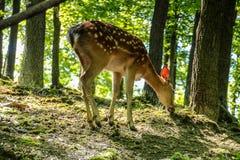 Kärt och lisma i en skog Fotografering för Bildbyråer