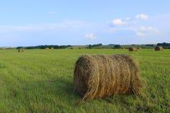 Kärvar av gräs i fältet i sen sommar royaltyfri fotografi