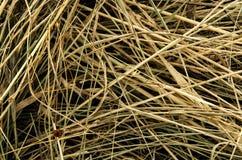Kärve av torrt gräs Royaltyfri Bild