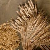 Kärve av vete och korn Royaltyfri Fotografi