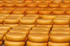 Käse auf Markt lizenzfreies stockbild