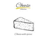 Käse Vektorhand gezeichnet vektor abbildung