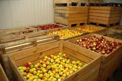 Kästen mit Äpfeln Stockbild