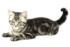 Kätzchenüberwachen Lizenzfreie Stockfotos