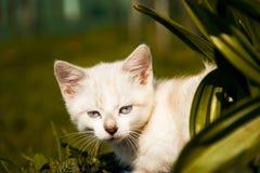 Kätzchen überprüft grünes Gras Stockfoto