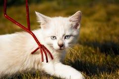 Kätzchen überprüft grünes Gras Stockfotografie