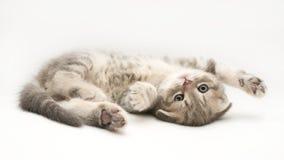 Kätzchen stockbilder