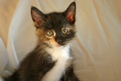Kätzchen 3 Lizenzfreies Stockfoto