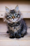Kätzchen Lizenzfreies Stockbild