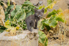 Kätzchen Stockbild