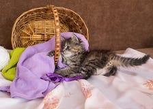 Kätzchen Stockfoto