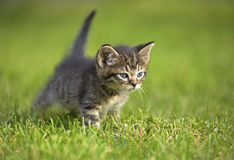 Kätzchen Stockfotografie