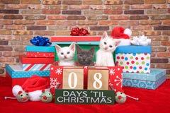 Kätzchen acht Tage bis Weihnachten Stockbilder