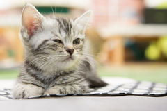 Kätzchen allein Lizenzfreies Stockbild