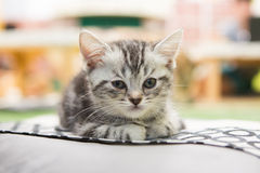 Kätzchen allein Lizenzfreie Stockfotografie