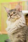 Kätzchen allein Lizenzfreie Stockbilder