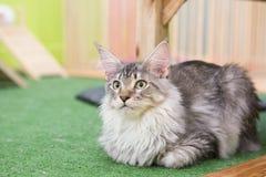 Kätzchen allein Lizenzfreies Stockfoto