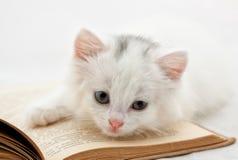 Kätzchen auf Buch Stockfotografie