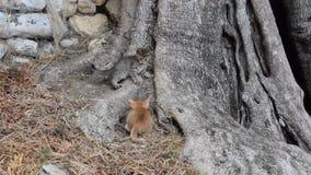 Kätzchen auf dem Baum stock video
