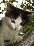 Kätzchen auf dem Baum Lizenzfreie Stockbilder