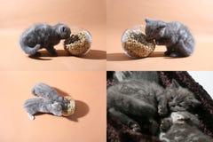 Kätzchen auf dem Boden, multicam, Schirm des Gitters 2x2 Lizenzfreie Stockbilder