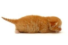 Kätzchen auf dem Fußboden getrennt auf Weiß lizenzfreie stockfotos