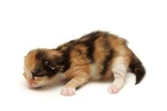 Kätzchen auf dem Fußboden getrennt auf Weiß lizenzfreies stockbild