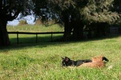 Kätzchen auf dem Gebiet Stockfotos