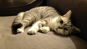 Kätzchen auf dem Trainer Lizenzfreies Stockfoto