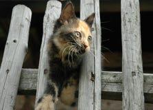 Kätzchen auf dem Zaun Lizenzfreie Stockbilder