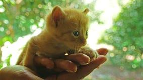 Kätzchen auf den Händen von Frauen schreien für ihre Mutter stock video footage