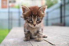 Kätzchen auf der Tabelle Stockfotografie