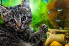 Kätzchen auf einem Hintergrund ein Aquarium mit Fischen Lizenzfreies Stockbild